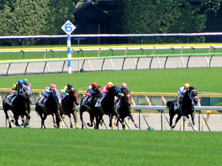 最後の直線を追い込む競走馬